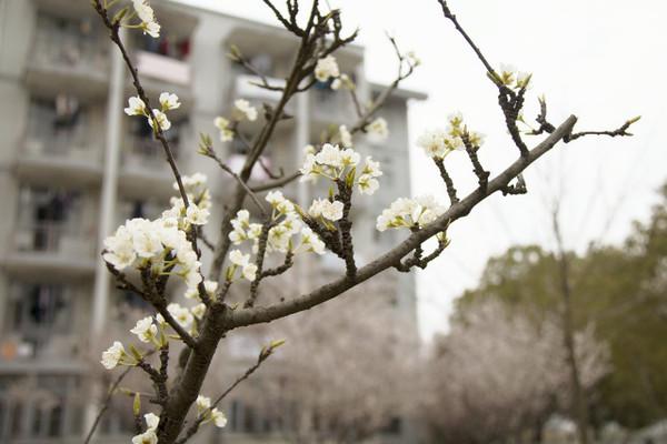 间的花儿 哦 春天